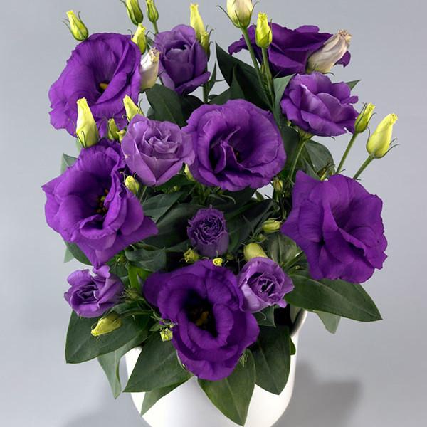 Rosie Lavender Blue